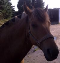 Tipps zur Behandlung von Mauke beim Pferd